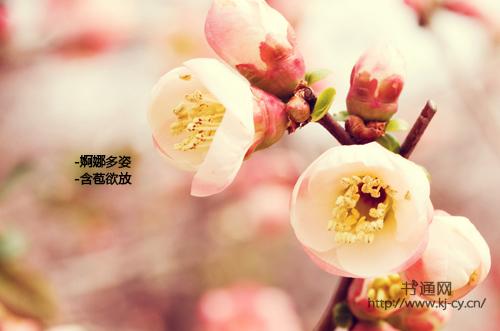 描写桃花的好词好句