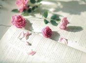 描写花的句子 透出一朵朵紫红色的小花