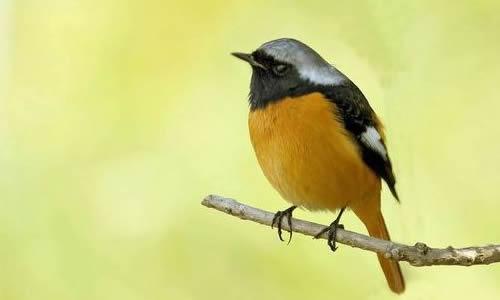 描写鸟的作文250字