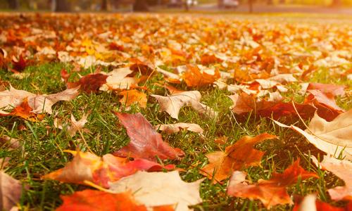 描写秋天落叶的作文图片