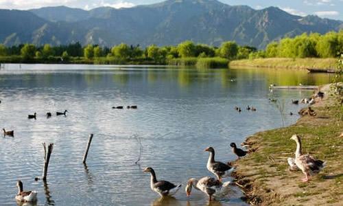 描写野鸭湖景色的作文