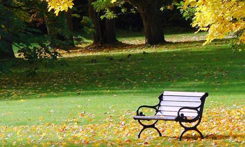 美丽的秋天180字作文