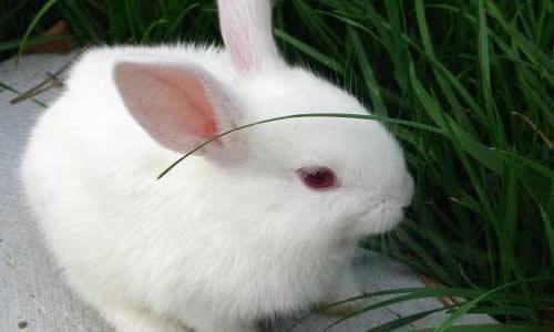 > 写小白兔的作文600字初一   我很喜欢自已养的这只可爱,聪明,有趣