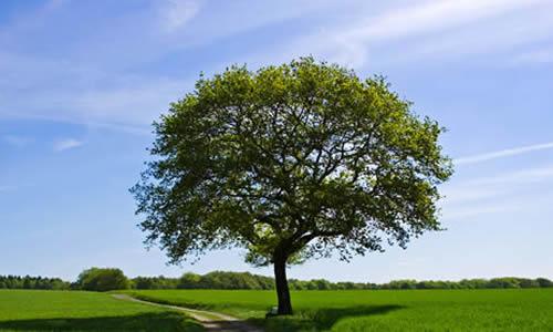 母爱就像一棵树作文