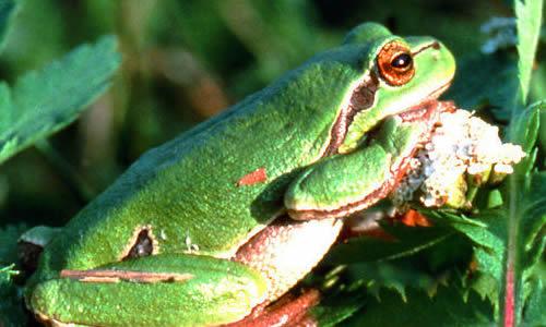 青蛙作文260字