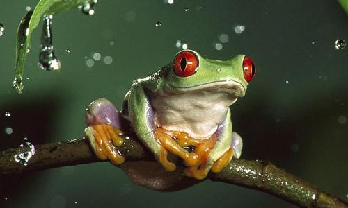 青蛙的启示作文400字
