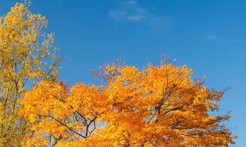 > 三年级秋天的作文200字   映入眼帘的是一大片一大片的果树,闻到了