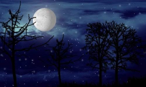 夜晚森林背景图 月亮