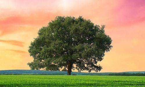 最后一棵树的遭遇作文