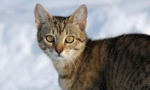 这麽可爱的猫会说话记者可不信,主人说那咱们等等,它一会就会说话了