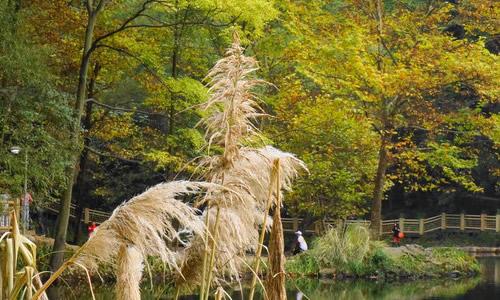 4芦苇与大树 池塘旁有一棵粗壮的大树,而池塘里只有一根弱小的芦苇.