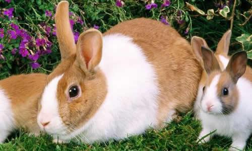 小白兔的眼睛最引人注目