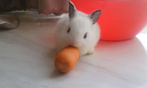 动物画画大全小兔可爱小兔图案