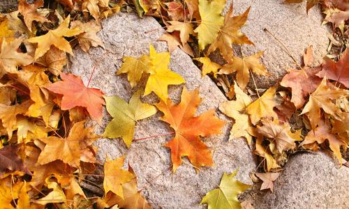 秋天的落叶三年级作文