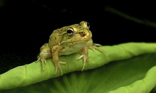 三年级作文青蛙哭了