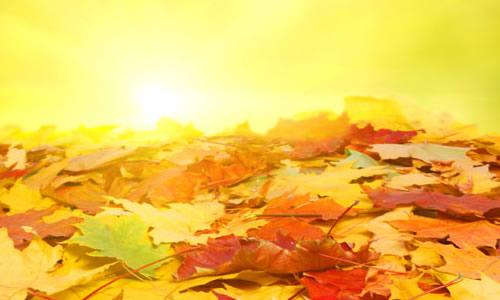 秋天的树叶的作文图片