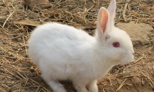 爱的小白兔2年级作文25个