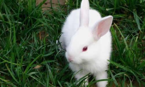 作文挑食的小白兔