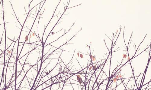秋天的风景龙虎娱乐app凄凉