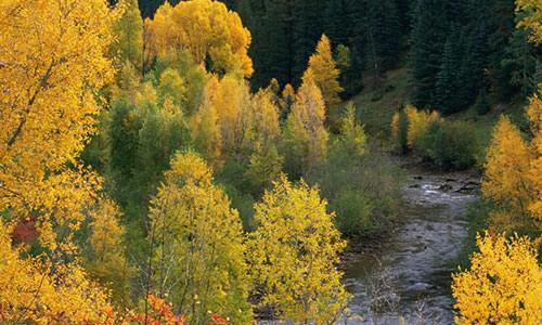 秋天景色的作文50字图片