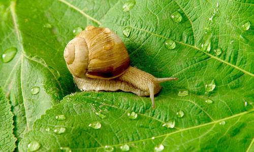 关于蜗牛的作文400字