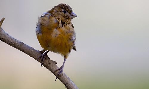 关于鸟类的作文300字