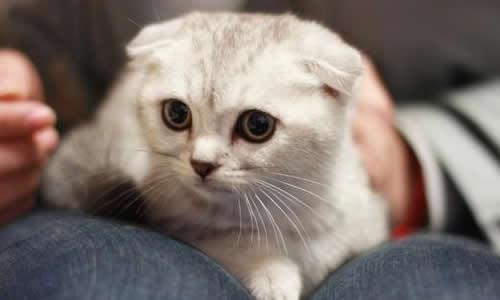 关于我和小猫的作文6篇
