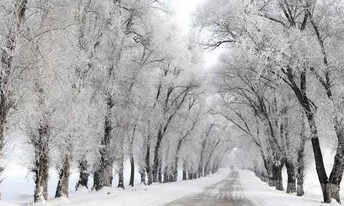 冬季哈尔滨旅游作文