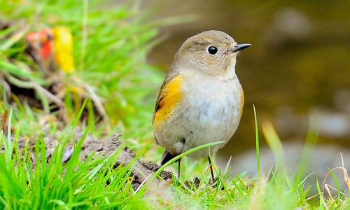 可爱的小鸟作文200字