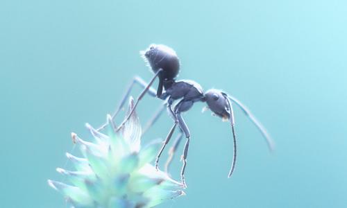 坚强的小蚂蚁作文