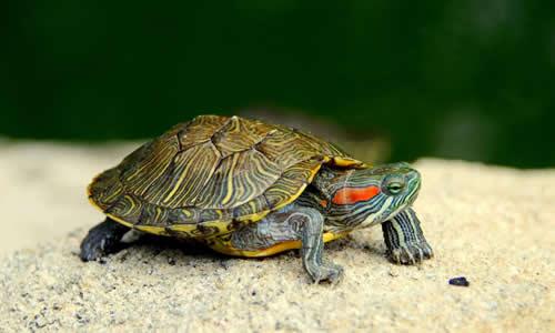 四年级作文小乌龟