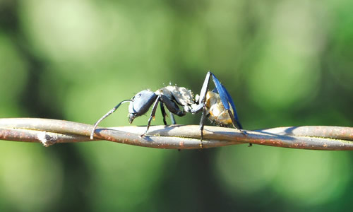 关于蚂蚁外形的作文