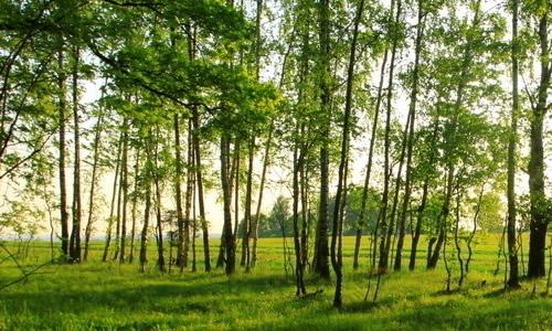 保护树木的作文270字8篇