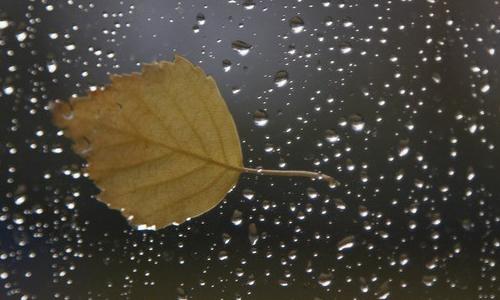 初秋的雨作文