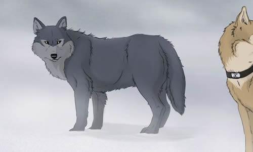 qq头像动物狼文字