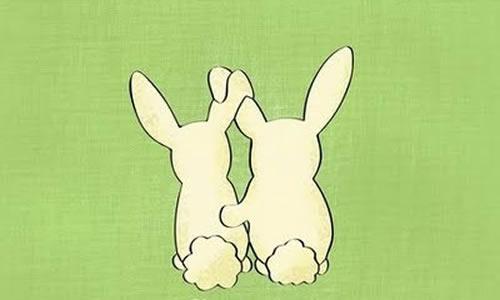 孔雀兔子结构图