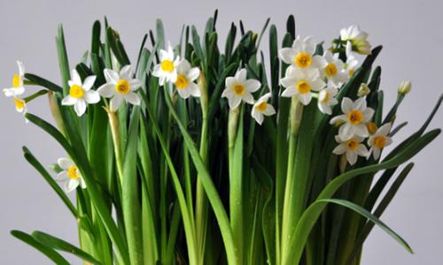 你看,六片洁白的花瓣都带有黄色.