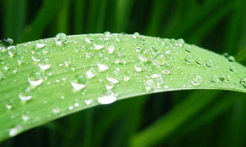 四季的雨作文450字