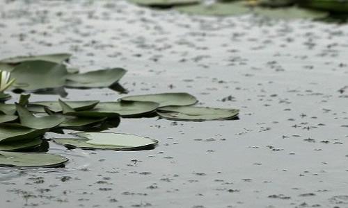 温暖的雨作文