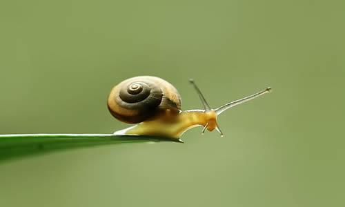 蜗牛身体结构图片大全