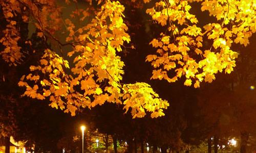 我爱迷人的秋天作文