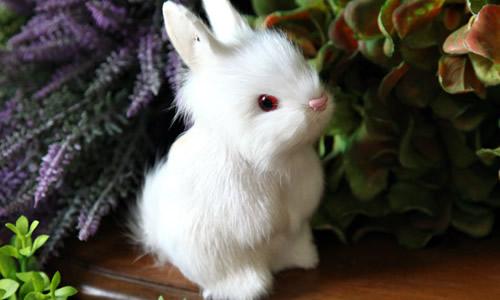 我和小白兔作文600字初一