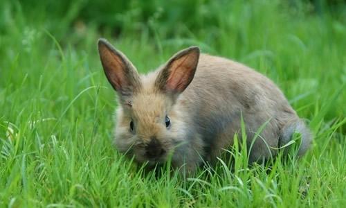 我家的小兔子作文1000字