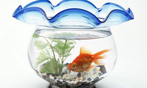 话题作文 > 我家的鱼缸作文300字   金鱼缸里住着三条美丽的小金鱼.
