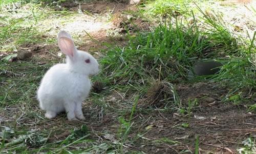 我家的小兔子作文400字