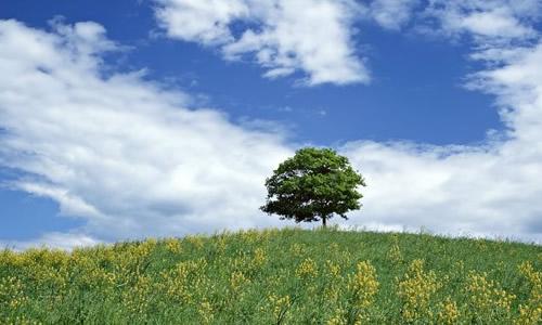 我是一棵树作文1000字