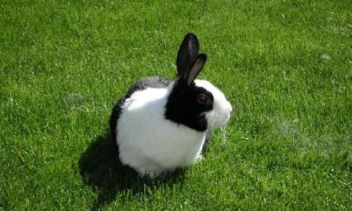 我家的小兔子作文100字