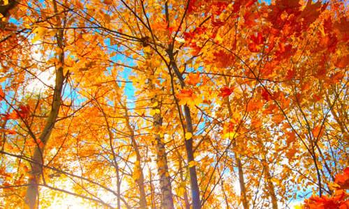四年级作文美丽的秋天