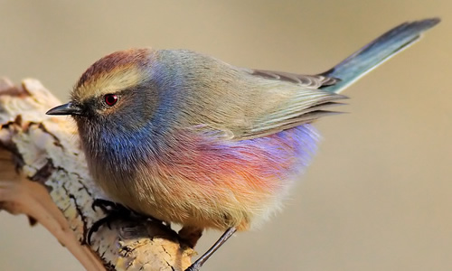 作文350字   假如我是一只鸟