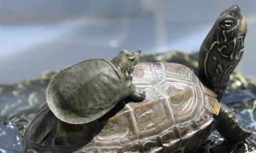 乌龟冬眠的作文